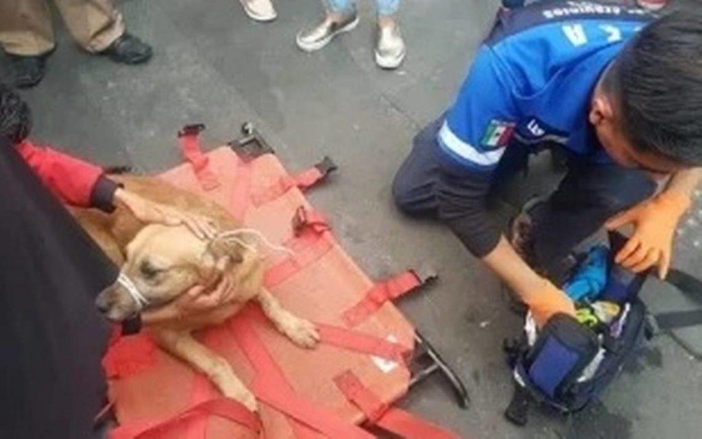 PGJ busca a hombres que lanzaron a dos perros de un edificio