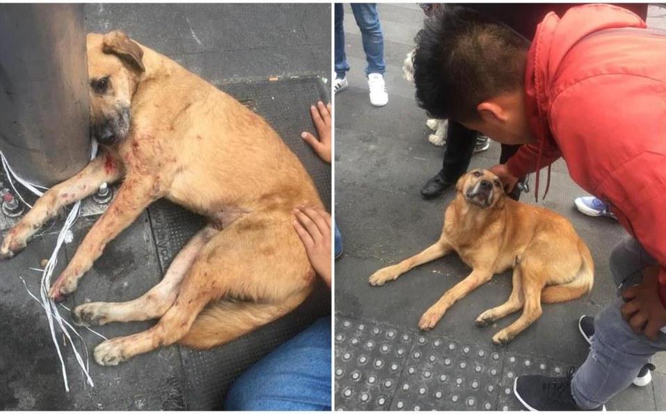 Brutal acción contra perros, los lanzan desde el techo de un estacionamiento