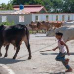 VIDEO | Un niño salva a su abuela del ataque de un toro en la India