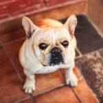 VIDEO | Perro obsesionado con el Rey León se hace viral por su reacción